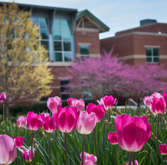 Tulips bloom in front of the Bardo Arts Center.